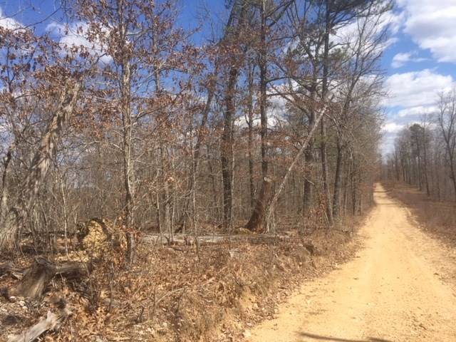 10 wooded acres with electric bordering the National Forest
