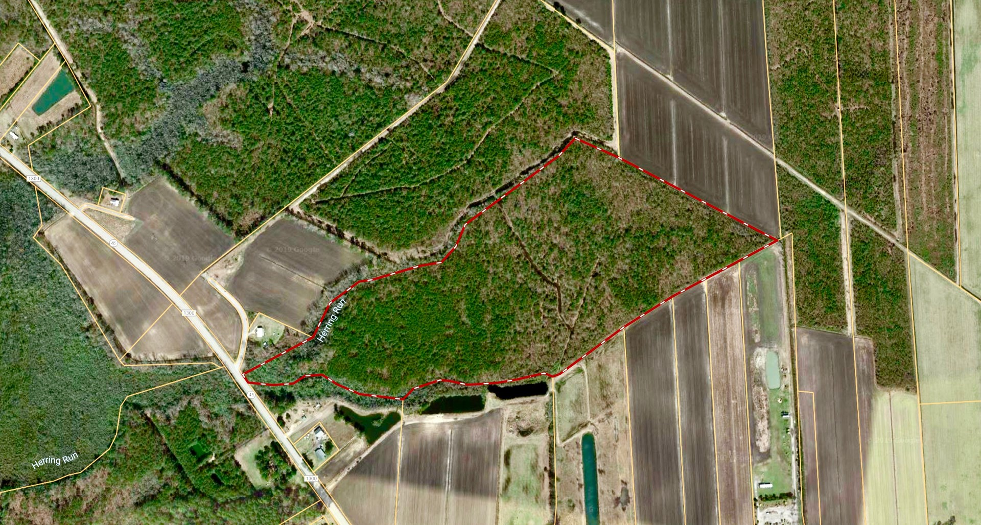 Timber/Hunting Tract for sale Hyde County, NC