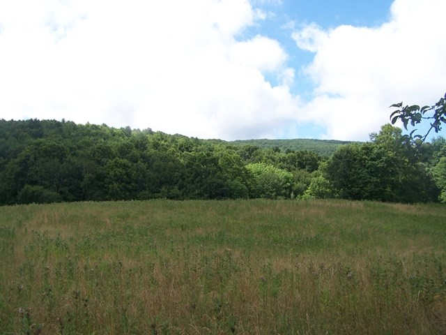 Secluded Tracts of Land in the Blue Ridge Mountains