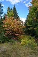 3.77 acres of land for sale in Howland, ME