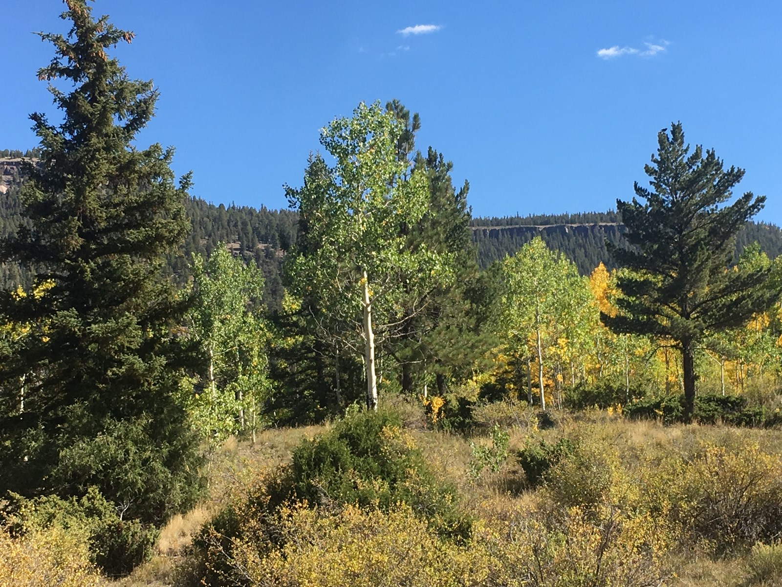 Build on This Lot Colorado Mountain Fishing Land For Sale