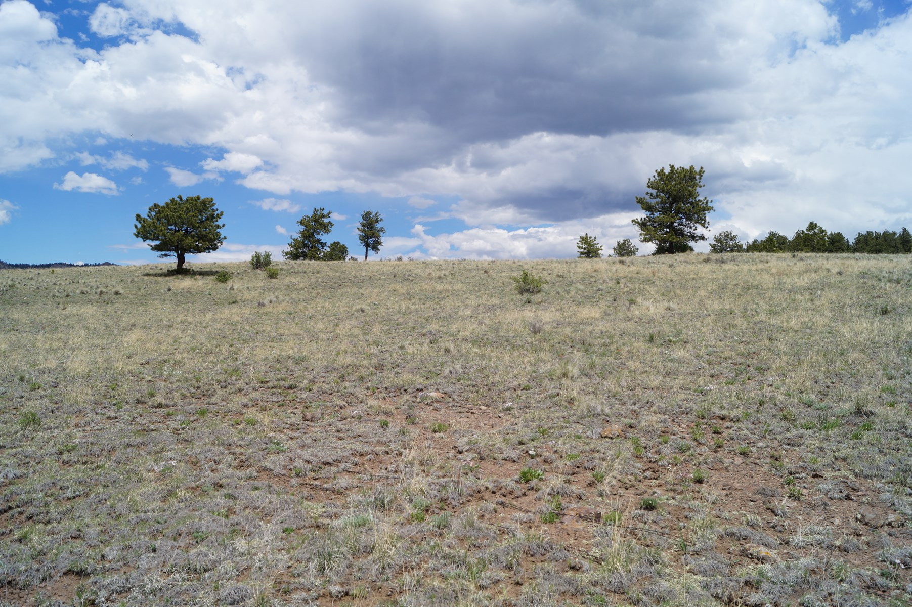 Almost 5 Acres with Mountain Views in Guffey, CO