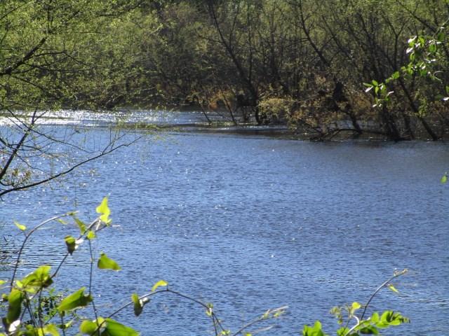 River front property on Ochlocknee River in Leon County Fl