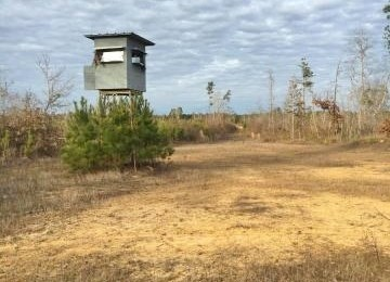 148 AC Hunting Recreational Timberland for Sale Attala Co MS