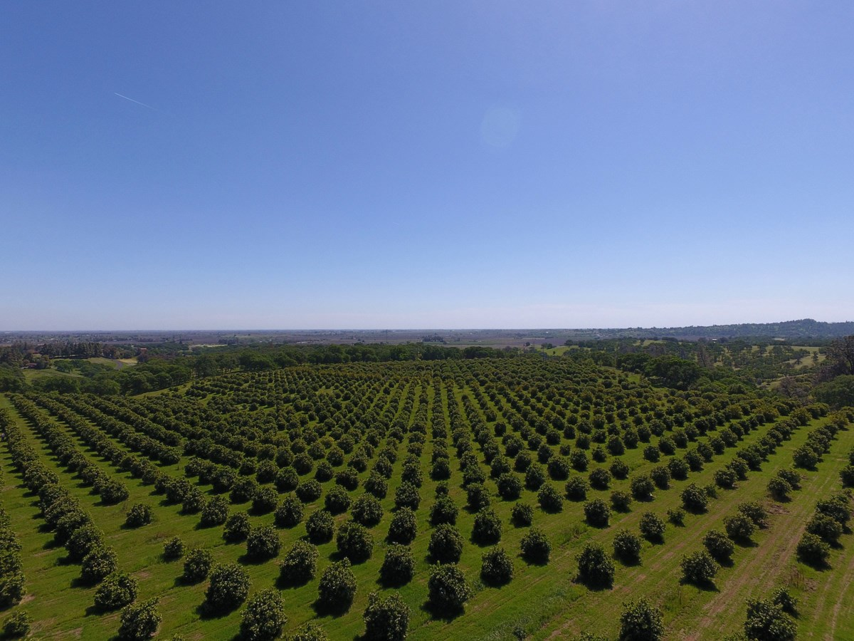 Orchards in Yolo County, Northern California For Sale
