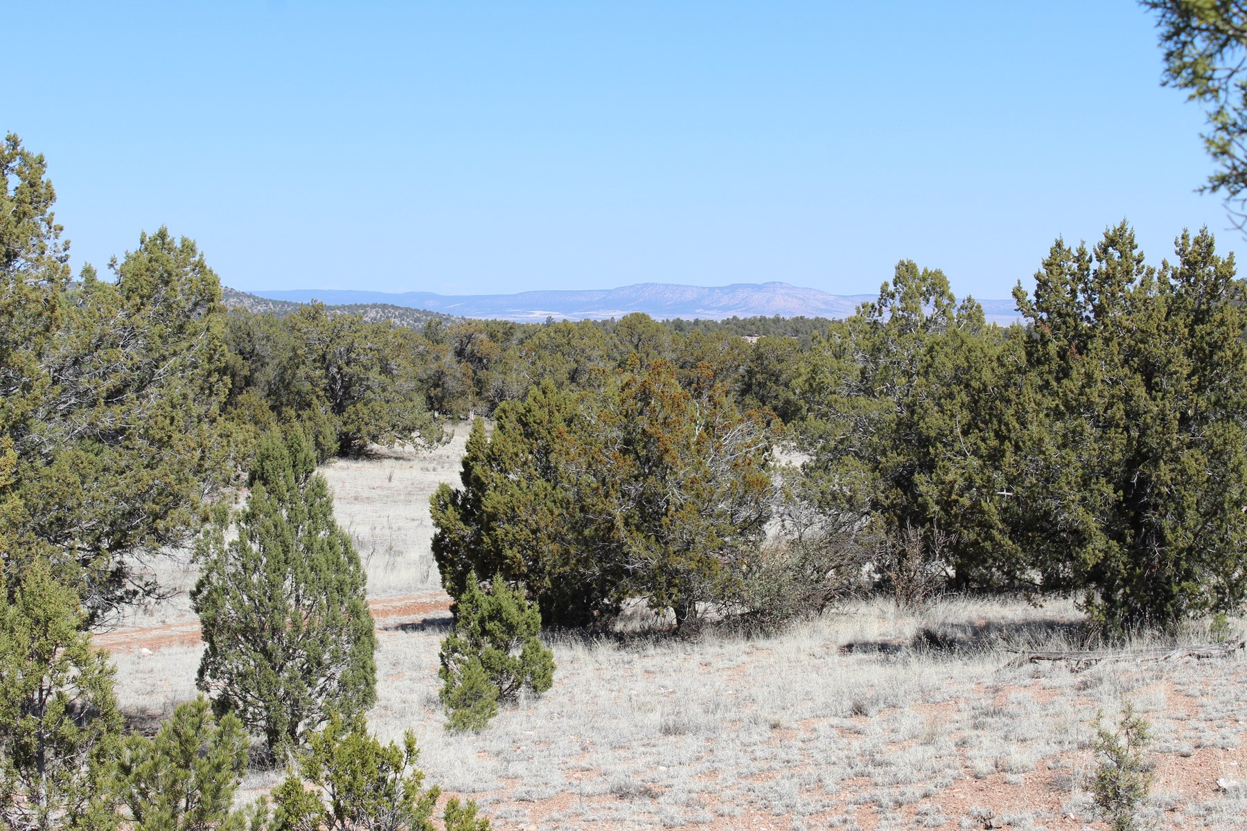 Northern Arizona 40 Acres for Sale