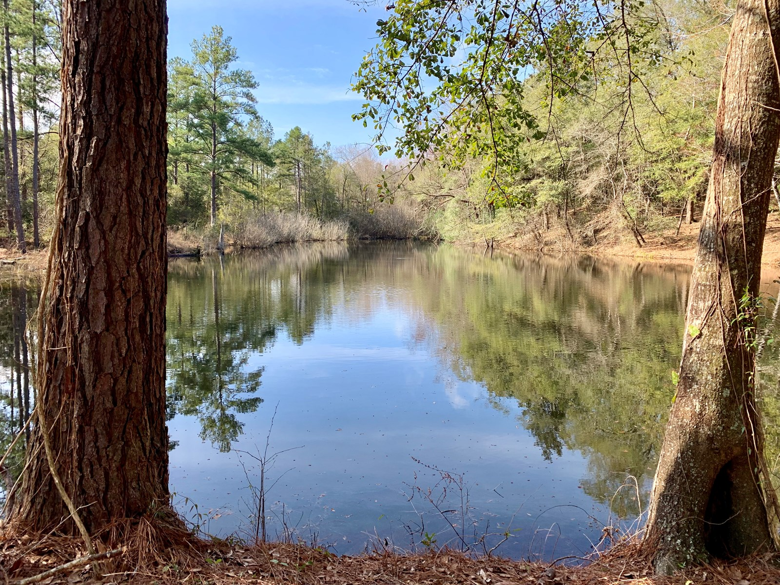 115 ACRES FOR SALE HEADLAND, ALABAMA