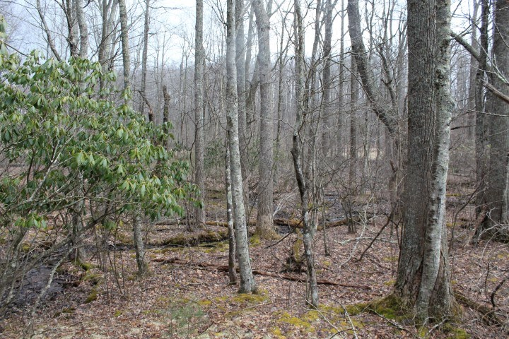 LAND FOR SALE IN FLOYD COUNTY, VIRGINIA