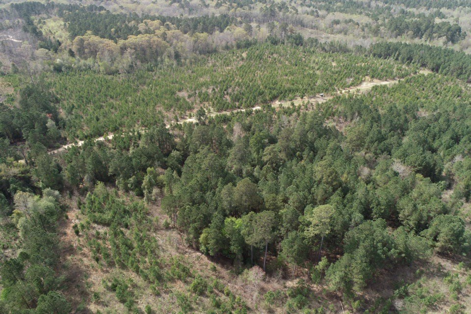 Southern Arkansas Pine Timberland for Sale in Nevada County