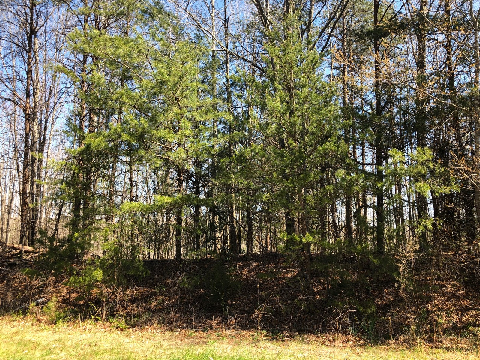 Large Lot For Sale in Hickory NC