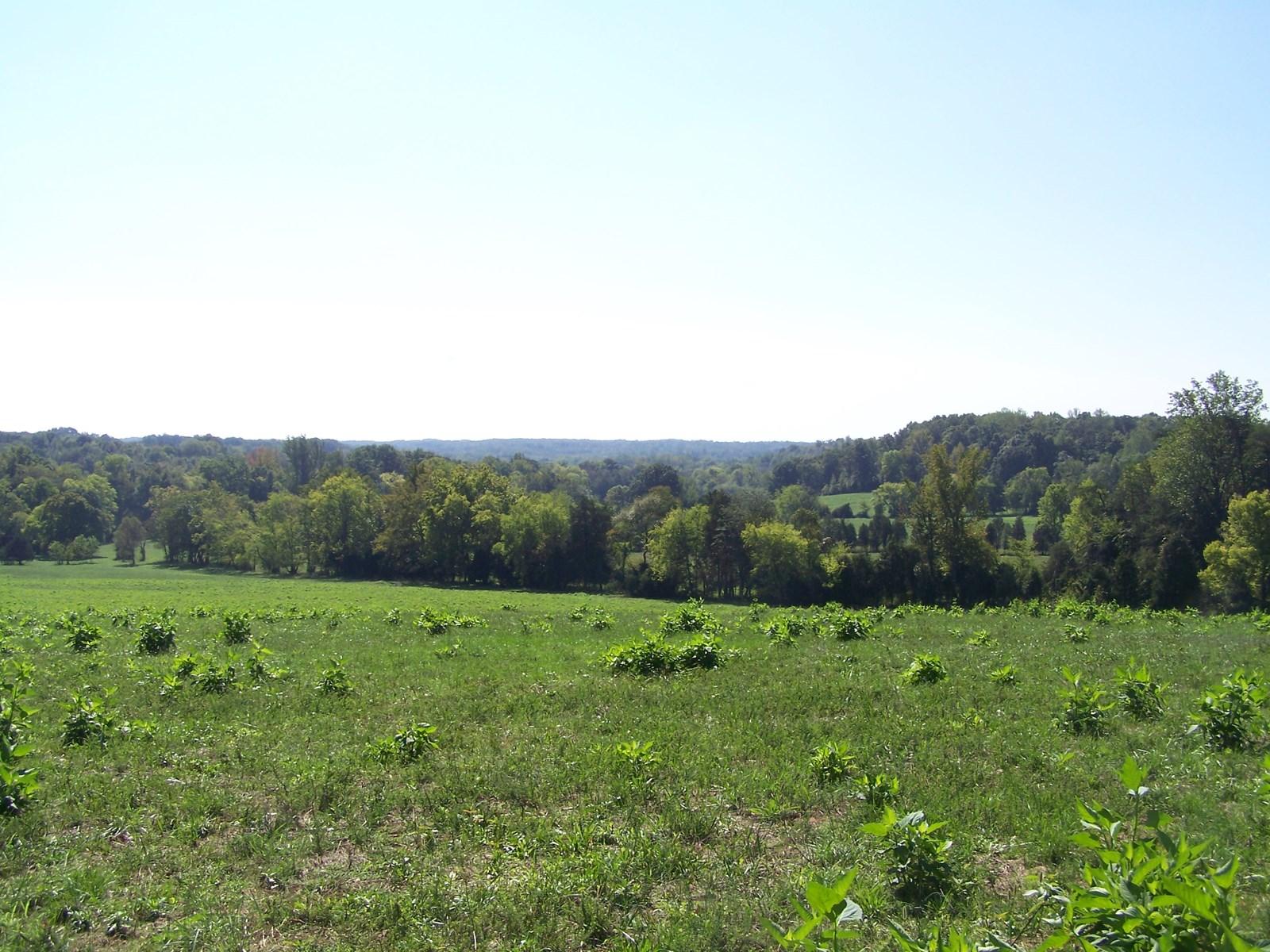 Acreage in Ringgold Virginia