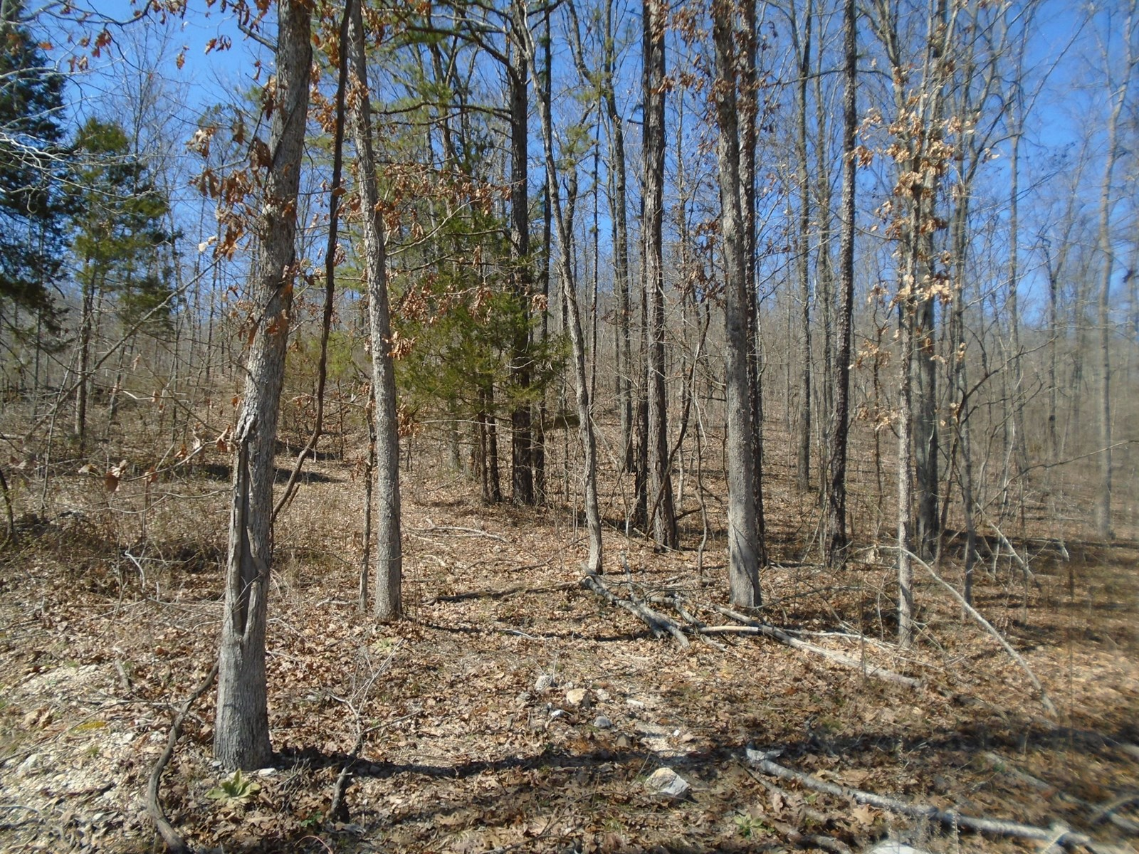 4 WOODED ACRES IN SOUTHEAST MISSOURI