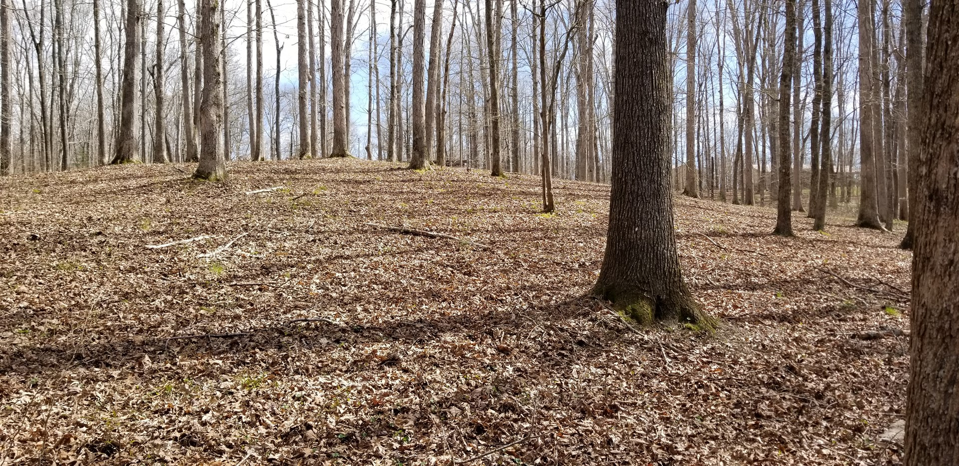 2 Acres Close to TN River in Perry County TN