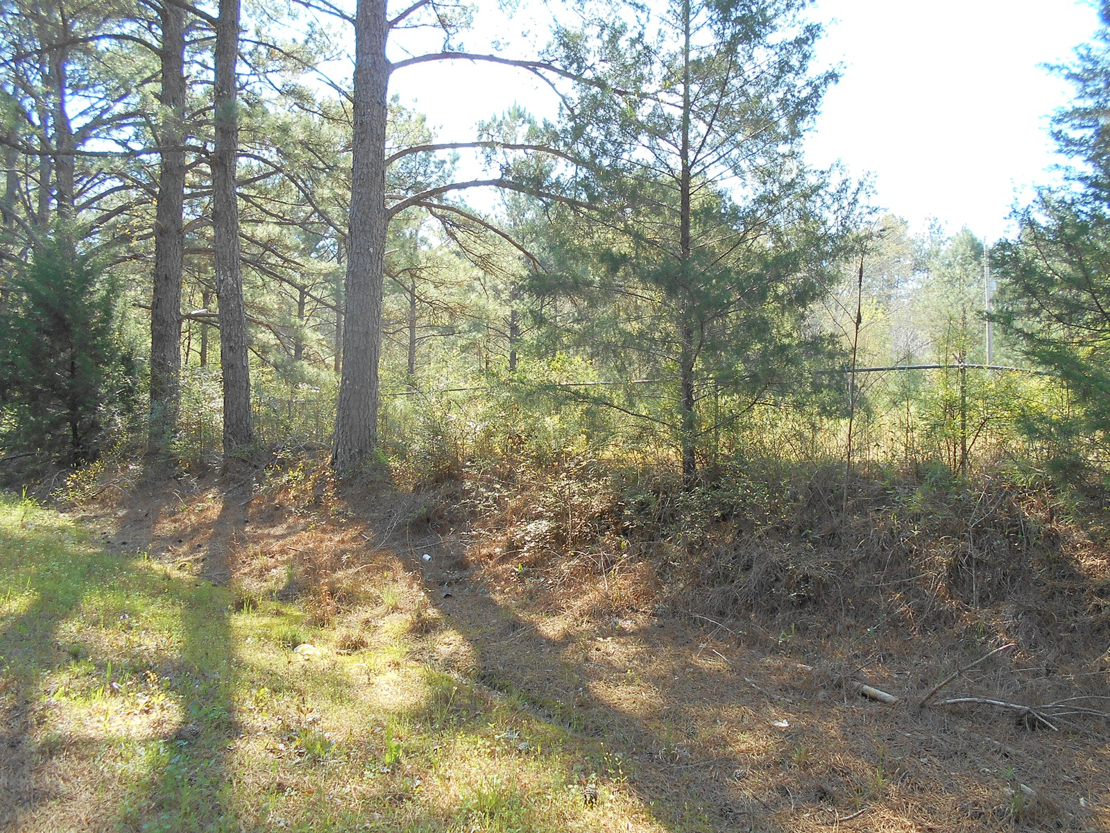 Land For Sale 3.75 Acres Lawrence County Sontag Mississippi