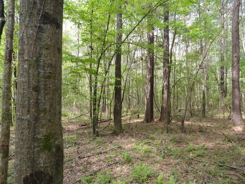 Wooded Land For Sale Lincoln County Bogue Chitto Mississippi