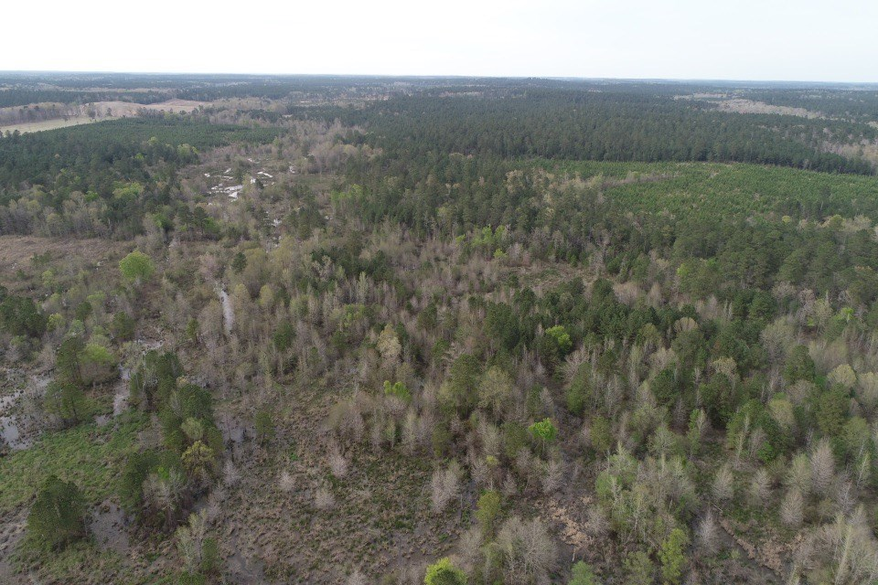 Pine /Hardwood Hunting Land for sale in Ouachita Co., AR