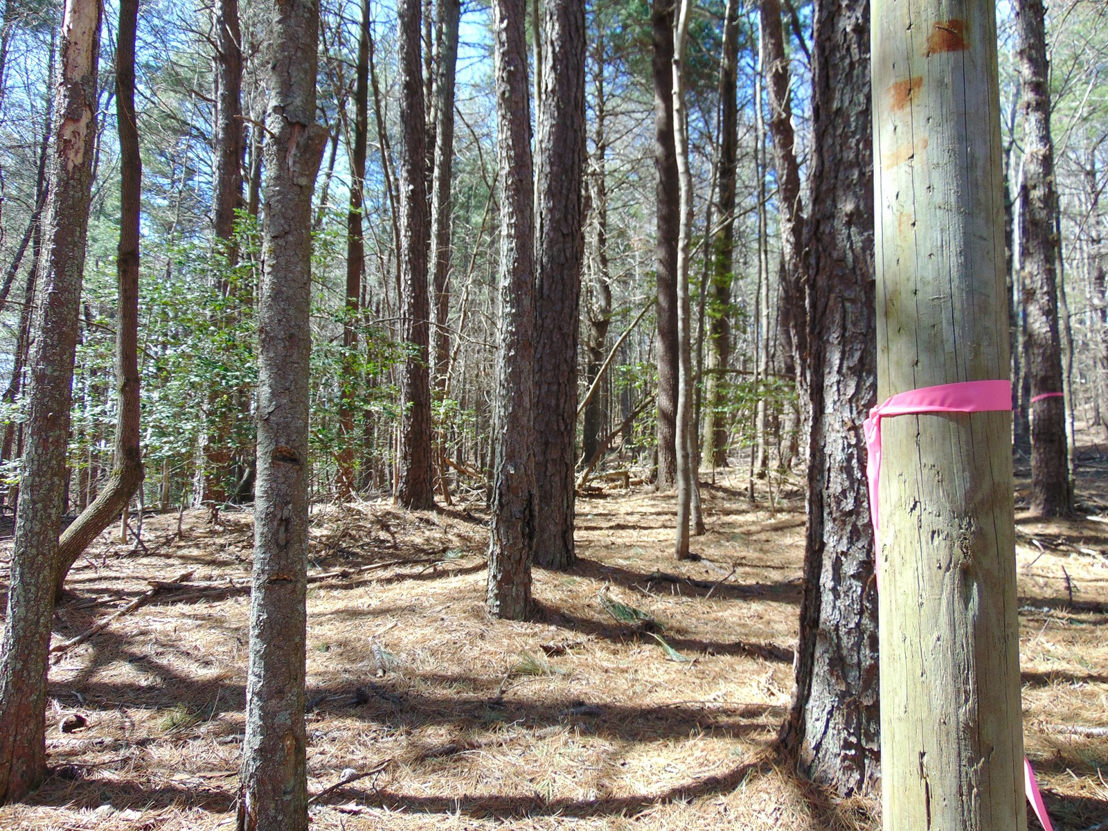 Unrestricted Mountain Land 2 Acres +/- Alleghany Co for sale