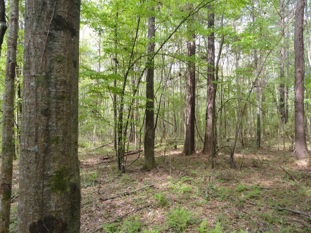 4.65 Acres For Sale Lincoln County Bogue Chitto Mississippi