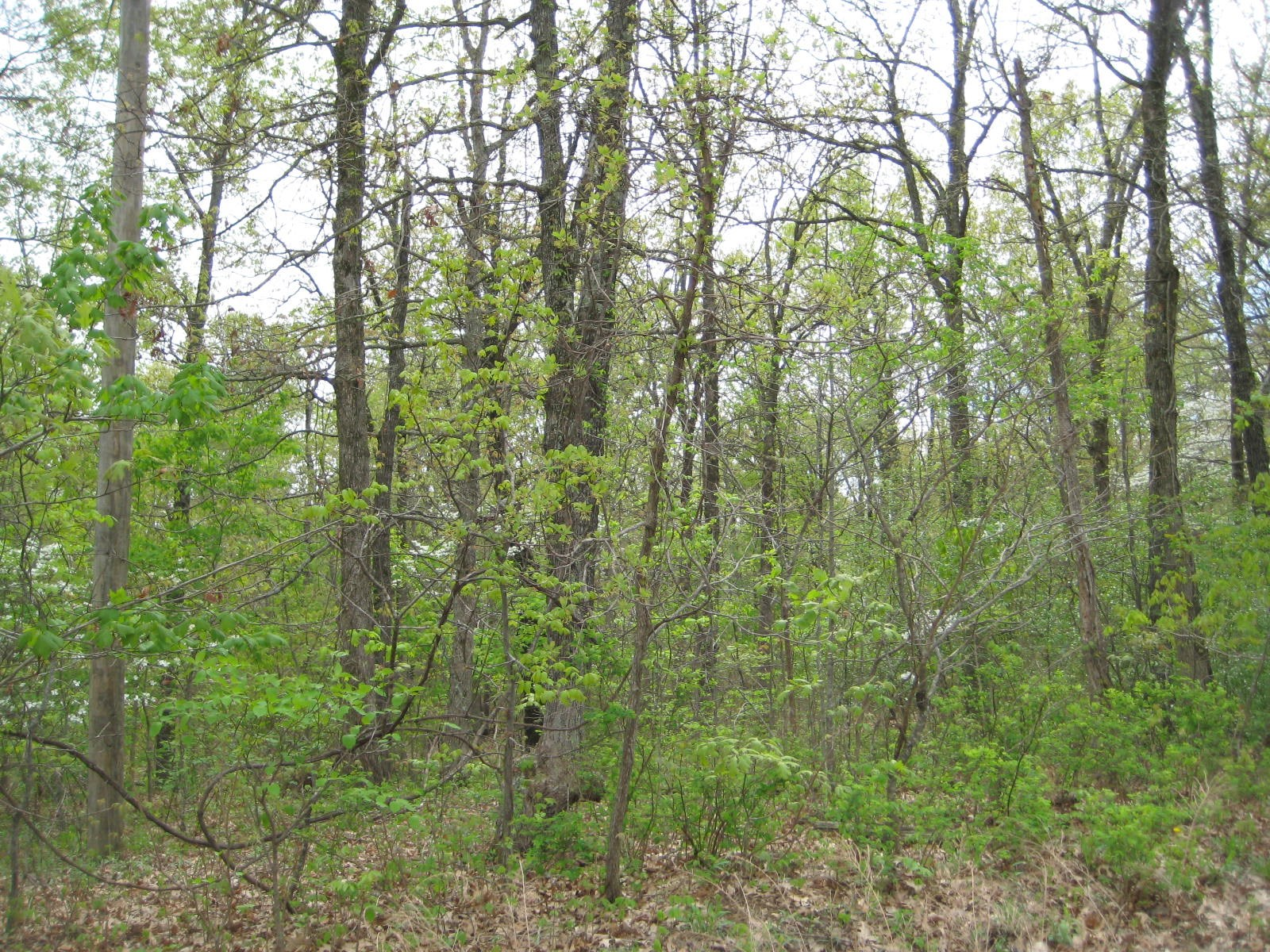 Land for Sale  Hunting,Camping, Building or Recreation! 7Acr