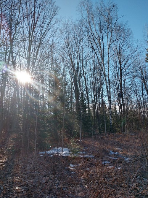 Ultimate Hunting Property 250 Acres with Creek  Atlanta MI