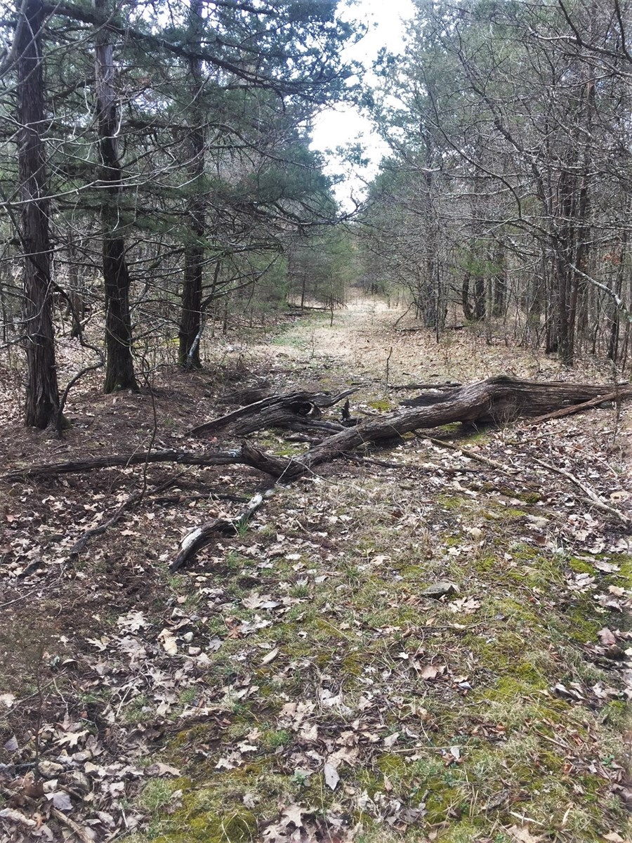 Wooded 156 acres tract with ATV trails in the OZARKS
