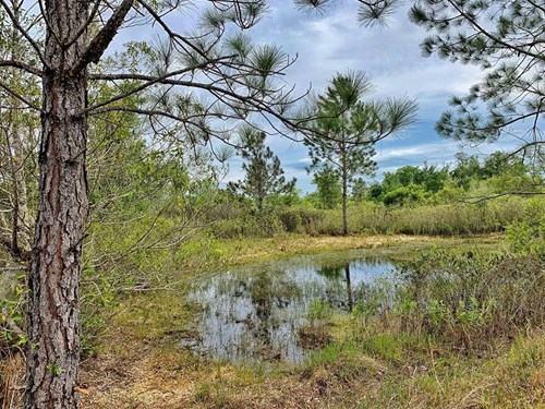 450+ ACRES PRIME HUNTING LAND - Levy County, Florida