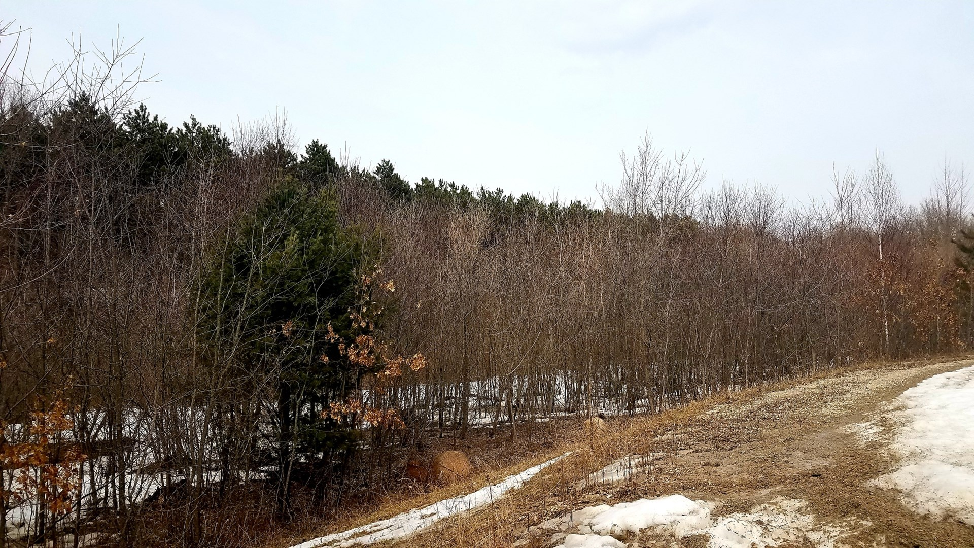 Wooded Land for Sale in Waupaca County WI