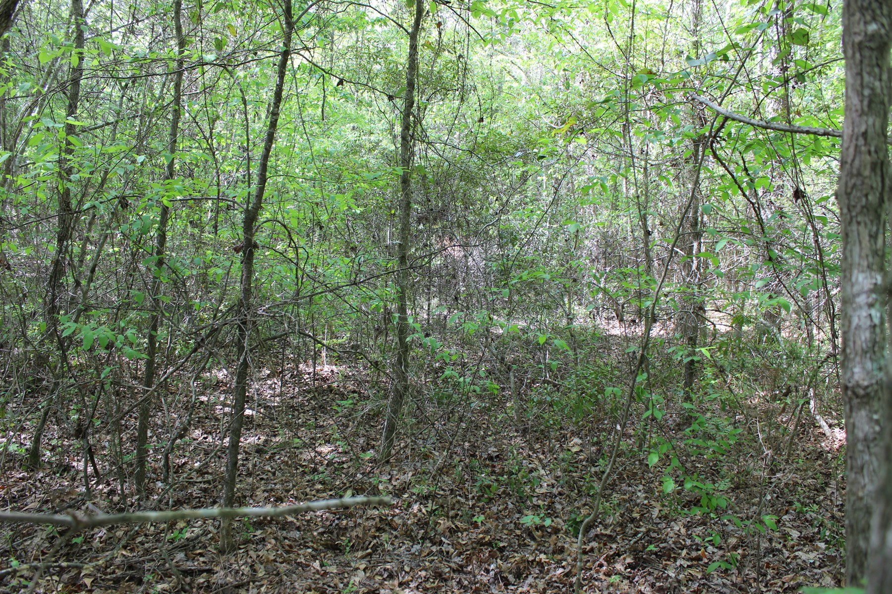 Heavily wooded hunting tract or home building site.