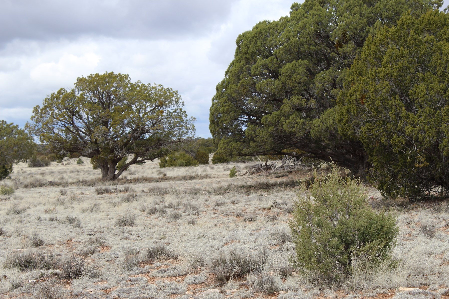 40 Acres of Mountain Property for Sale in Seligman AZ