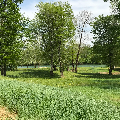 River Lot on Current River in the Pine Cone Estates