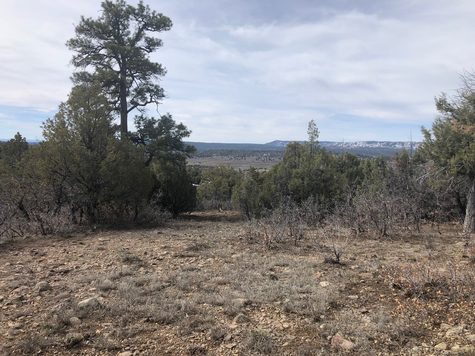 Amazing Property for Sale west of Chama NM, well and Electr