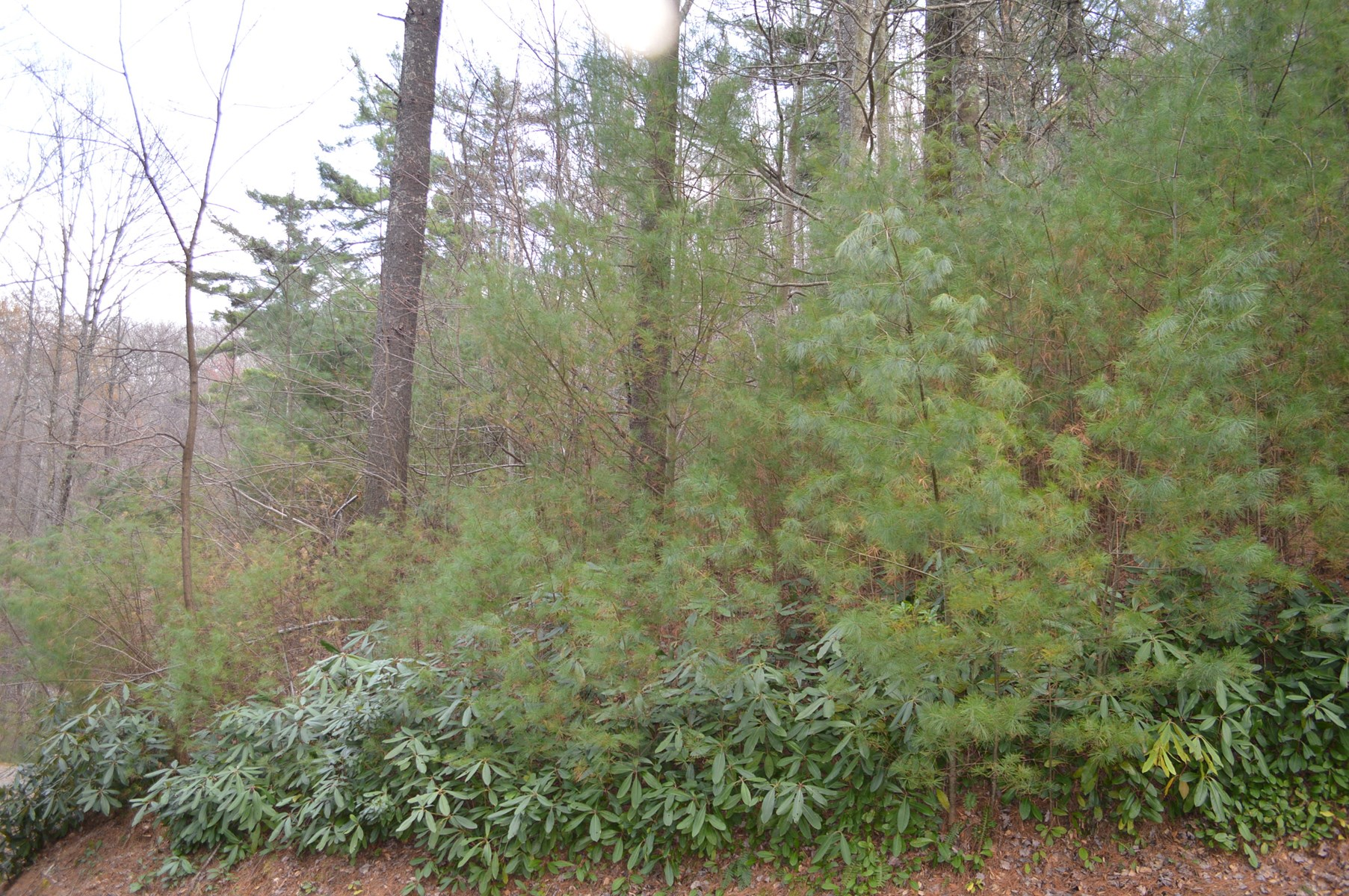 Wooded Mountain Building Lot for Sale - Alleghany County