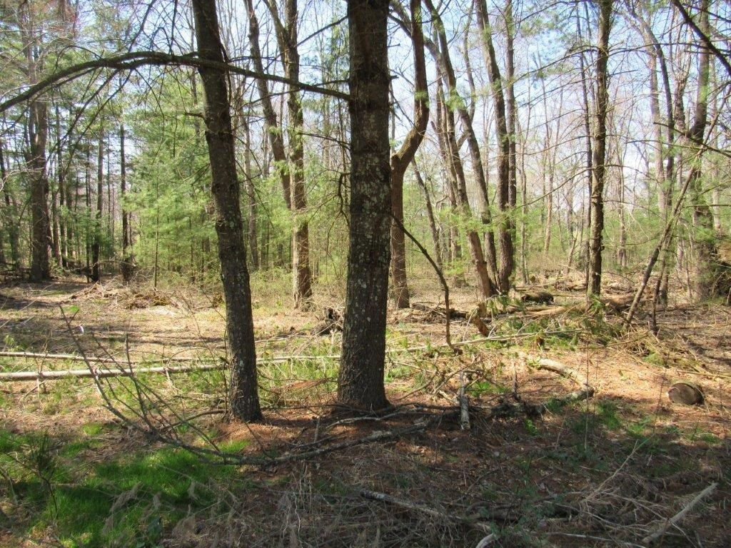 Home with Acreage & Lot for Sale at Auction in Floyd VA