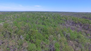 25 ACRE HUNTING TRACT W/TIMBER - CASEY COUNTY KENTUCKY