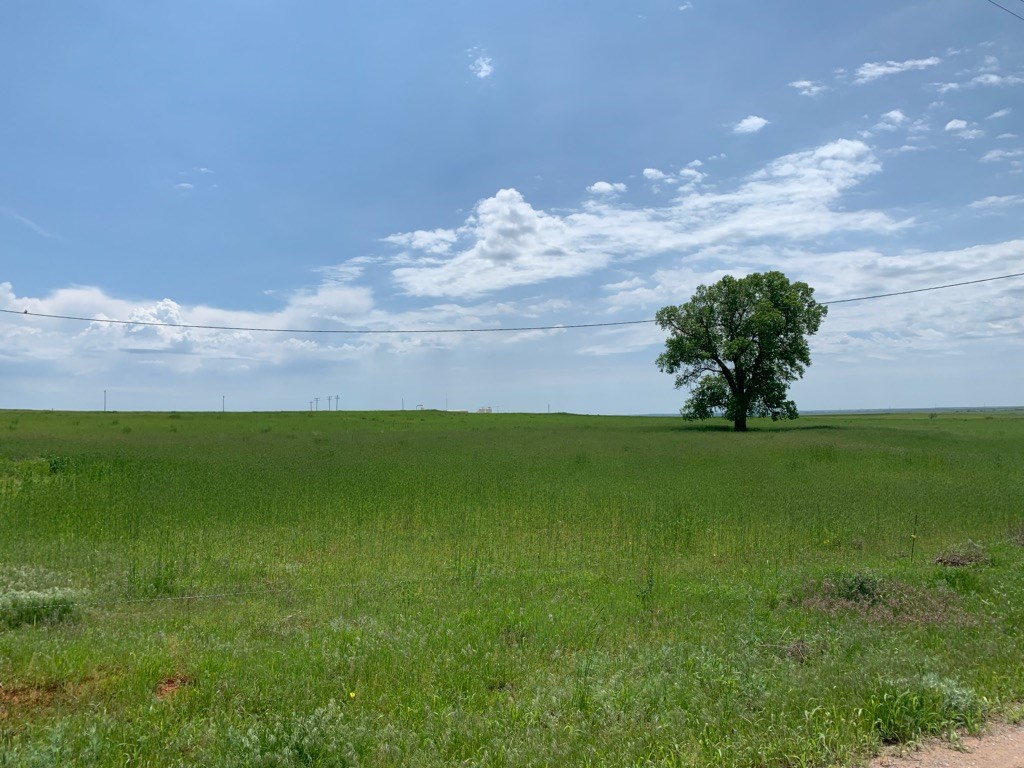 Land for Sale | Washita County