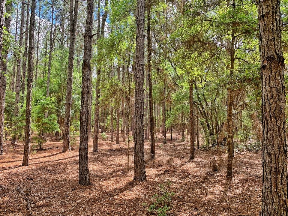 9+ ACRES IN SPRING RIDGE RANCHETTES-High Springs, Gilchrist