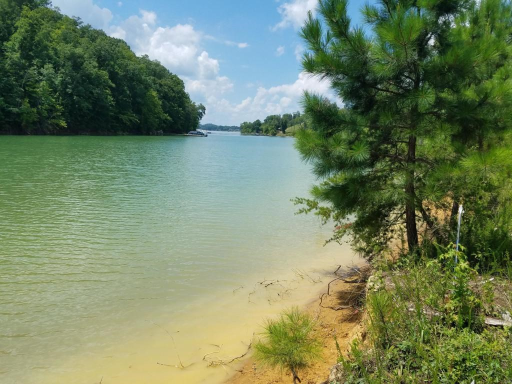 OWNER FINANCING on this beautiful 1.46 acre Lake front lot