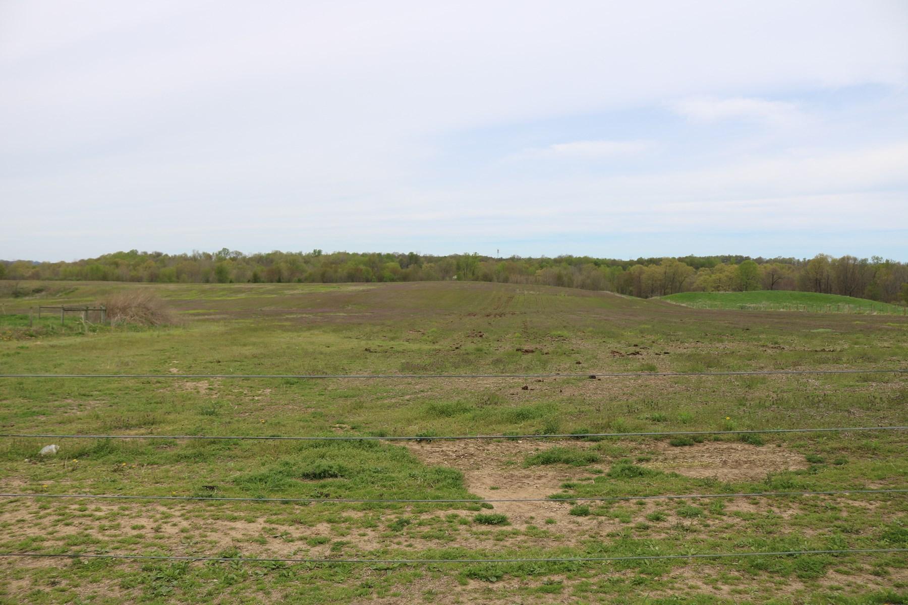 Grain & Livestock Farm