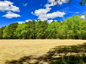 FARM/HUNTING TRACT FOR SALE BEAUFORT/PITT COUNTY, NC LINE