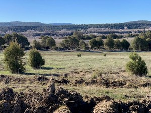 NORTHERN NM IRRIGATED LAND FOR SALE WITH WATER RIGHTS CHAMA