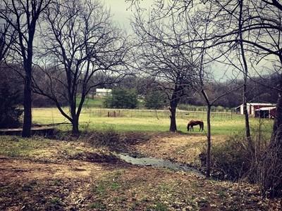 80 Acre Horse Farm/Facility w/Orchard