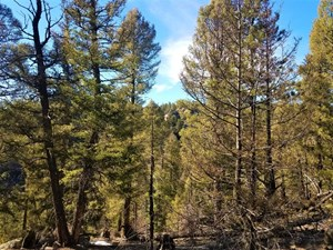 VACANT LAND IN FLORISSANT, CO WITH AMAZING VIEWS