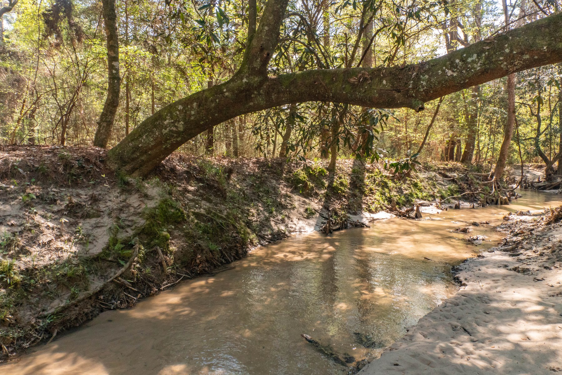 CATTLE & HUNTING RANCH FOR SALE | NICE CREEKS, MASSIVE HILL