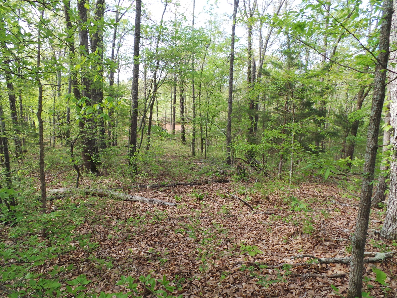 LAND WITH UTILITIES FOR SALE NEAR BUFFALO RIVER ACCESS