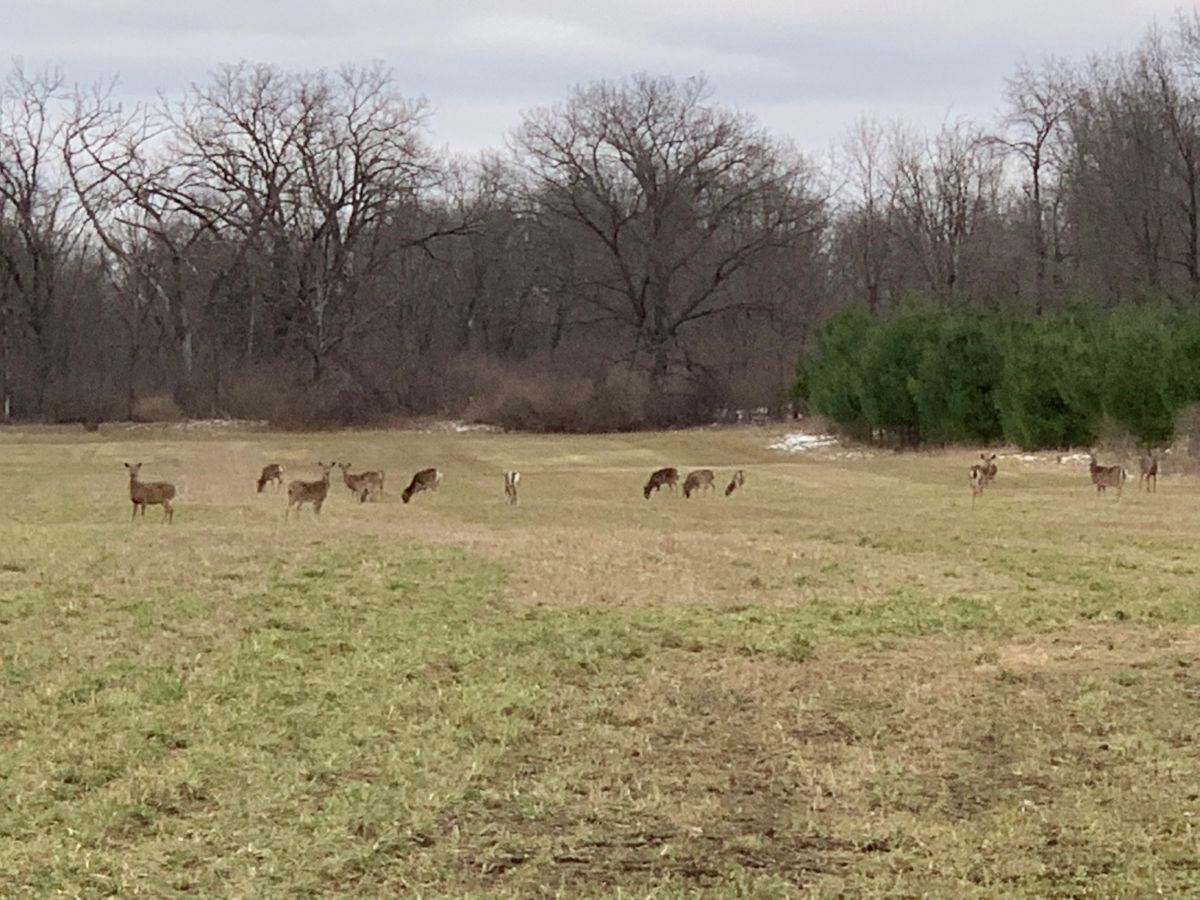 Hunting Land in Columbia County, Close to Columbus WI