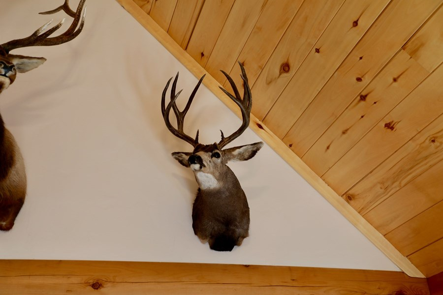 Deer and elk harvested on property