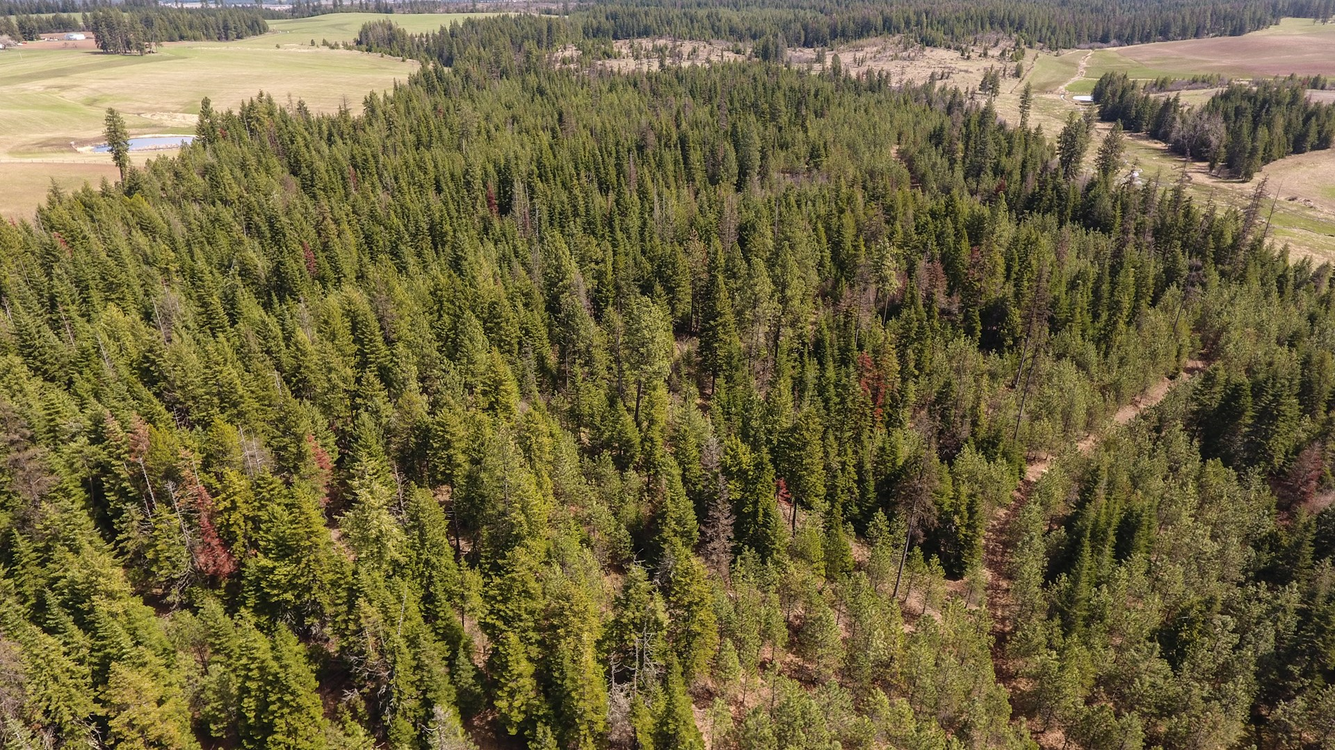 Hunting/ Recreational property for sale North Central Idaho