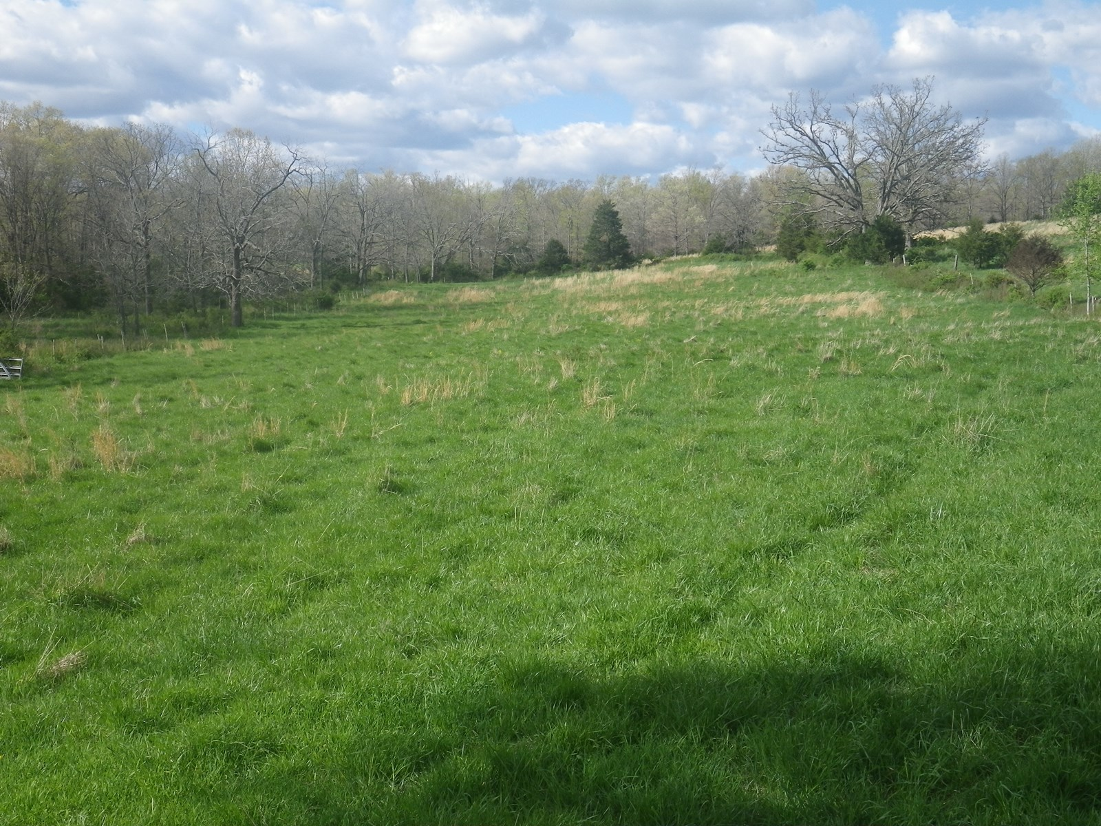 Land for Sale - Pasture - 2 Ponds - South Central Missouri