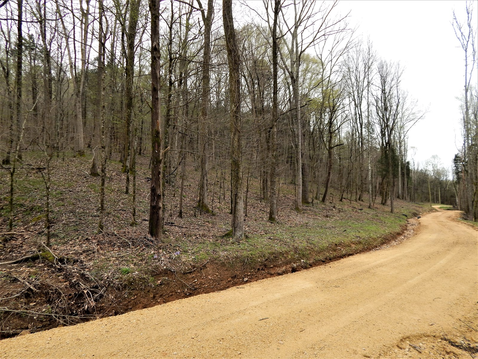 WAYNE COUNTY TN 22 AC HUNTING LAND FOR SALE SEASONAL STREAM