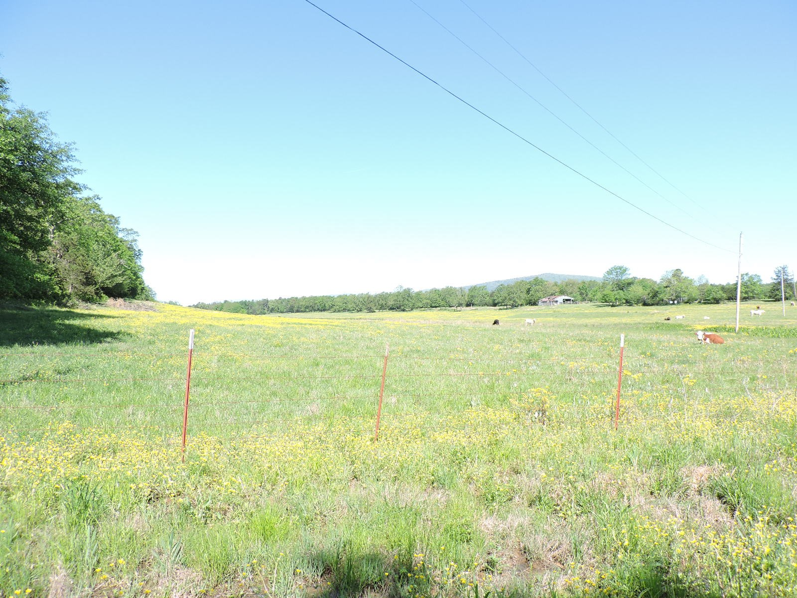 Prime Pasture Land For Cattle or Poultry Farm